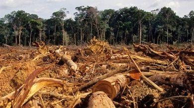 Stiamo entrando in un'era di pandemie – finirà solo quando proteggeremo la foresta pluviale