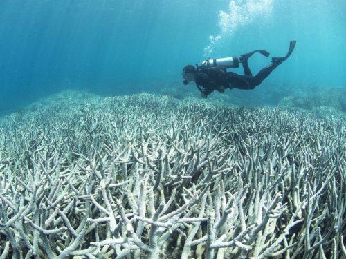 Perché i record di riscaldamento degli oceani vengono battuti anno dopo anno?