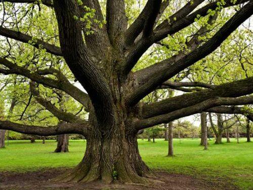 L'albero e il suo ruolo nell'ambiente umano